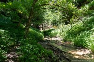 Tripp Falls – Looking upstream towards the falls