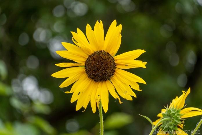 Homestead National Historical Park - Wildflowers