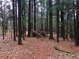 Pine-needle covered trail near end of Enee Point