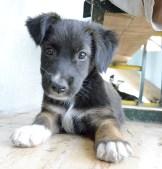Sister Mona's Puppy