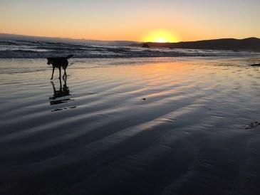 Sunset walks? Check.