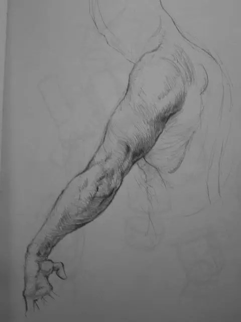 Arm Charcoal Studies by Adam Miconi