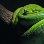 Python for Real Estate