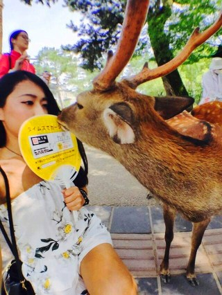 Funny Deer Moment From Nara Park