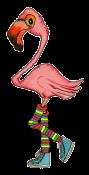 Flamingo2-designs