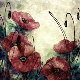 Red Poppies - Copy
