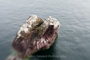 Using a Lens Baby for a different take on a guillemot colony.