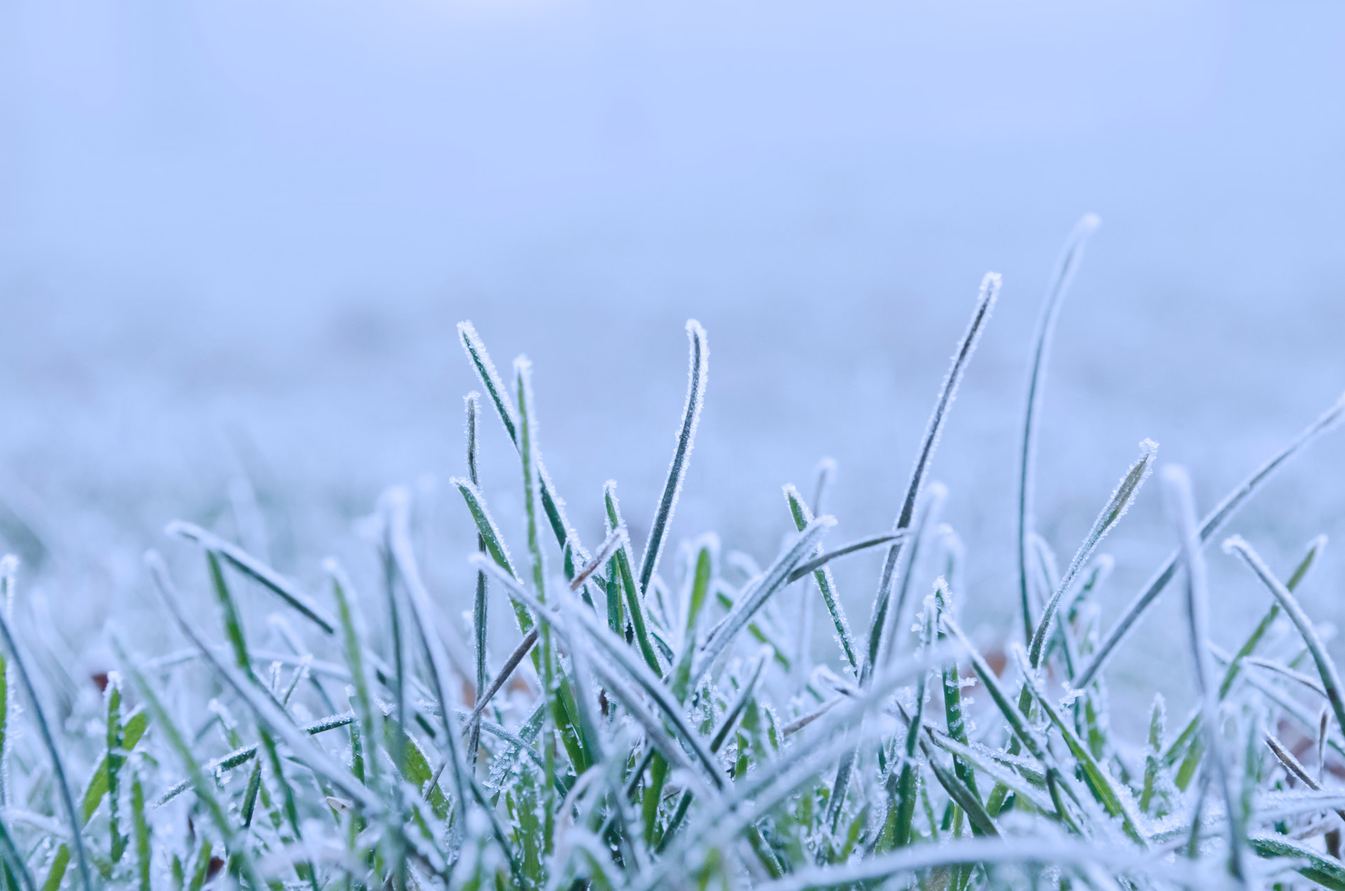 frozen-grass-13554096469BF
