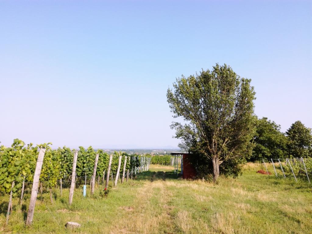 bona winery batorove kosihy podunajsko slovensko