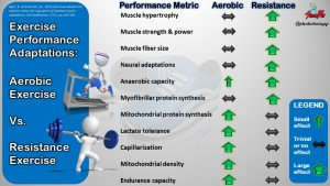 Exercise Performance Adaptations to Aerobic vs. Resistance Exercise