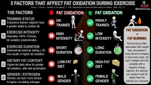 5 Factors That Determine How Much Fat is Burned During Exercise