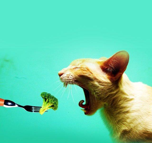 Cat not liking broccoli