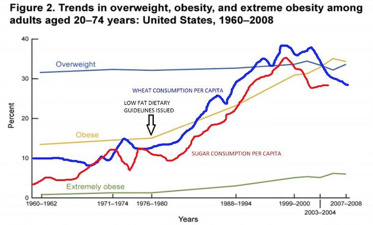wheat and obesity correlation