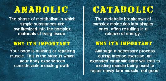 Anabolic vs Catabolic