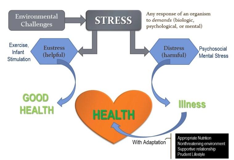 Eustress vs Distress png - Adarsh Gupta