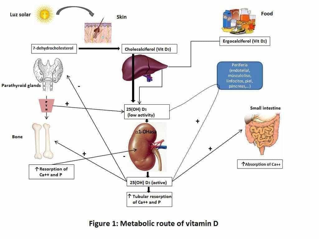 D vitamīna metabolisms organismā