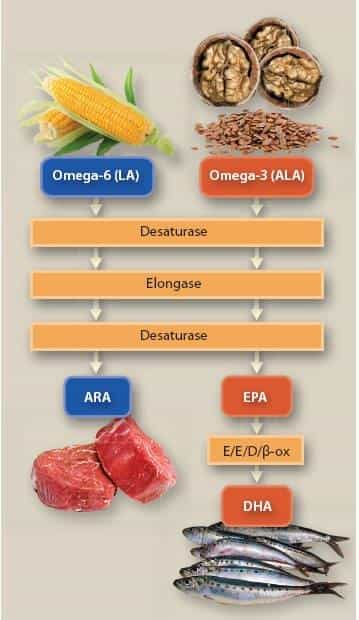 Omega3 un Omega6 metabolisms