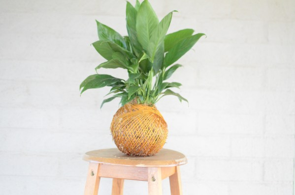 Kokedama, A dash of Gree, Peace Lily