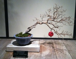Charlie Brown's tree in bonsai. We wondered if the pomegranate had grown there.