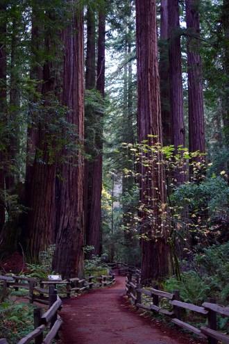 Muir Woods - San Francisco - Redwoods - Travel Blog - Muir Woods Hike - Fashion Blog - Haute Hijab Scarf