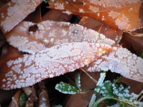 morningfrost02