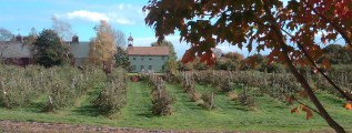 Autumn at Brooksby