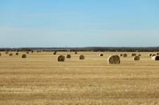 Farmlands of Northern Alberta