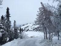 Hoarfrost coats the vegetation along Frame Lake Trail