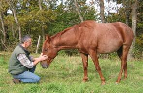 debourrage chevaux randonnée cheval auvergne