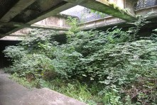 Botanic Gardens ghost station