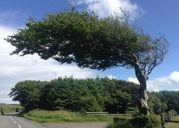 Tree along the Coleridge Way, Somerset