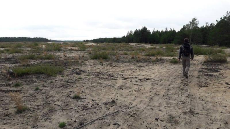 dennen - bos - woestijn - zand - natuur - wandelen - hiken - Polen