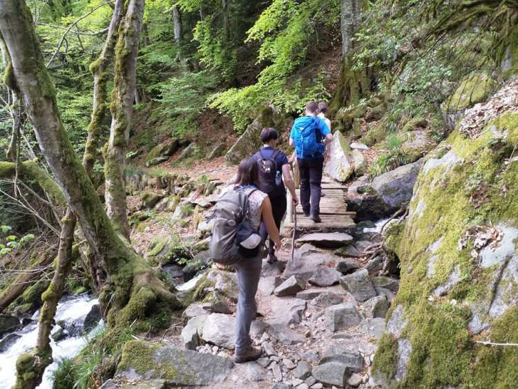 Ascent of the Hohneck
