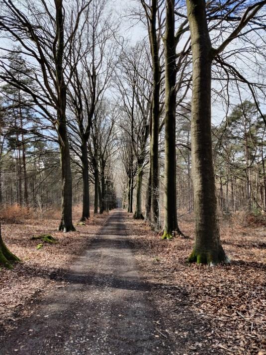 Bos van Stambruges