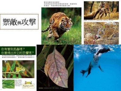 哇!大自然 泛亞文化