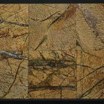 Rain Forest Gold Leathered  12x12 Lot 41706 IMG