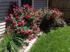 Backyard - File May 12, 3 08 27 PM