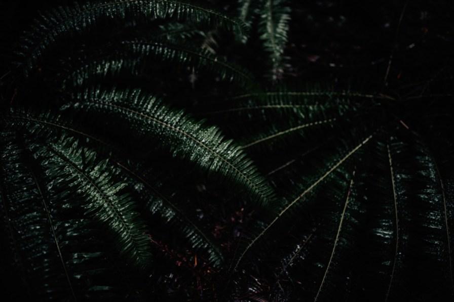 Wenatchee-national-forest-engagement-session-photographer-004.jpg