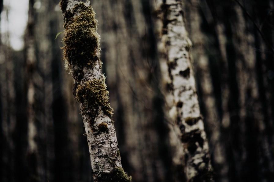 Wenatchee-national-forest-engagement-session-photographer-023.jpg