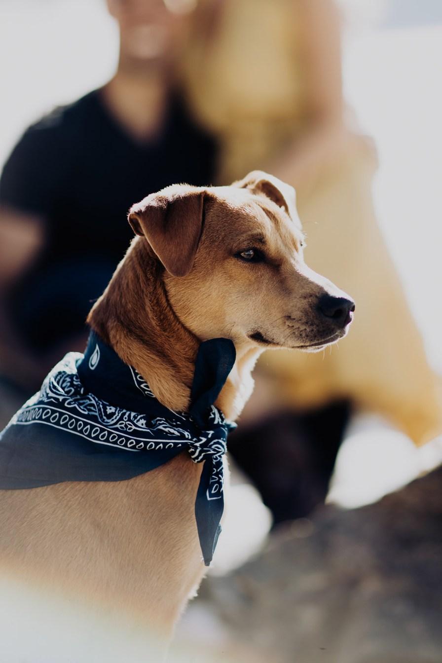 Adventure-Elopement-Photographer-Colorado-dog