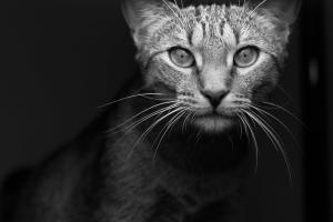 Petey the Cat