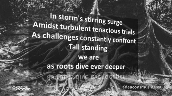 Roots Dive