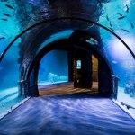 Funtastic Aquarium