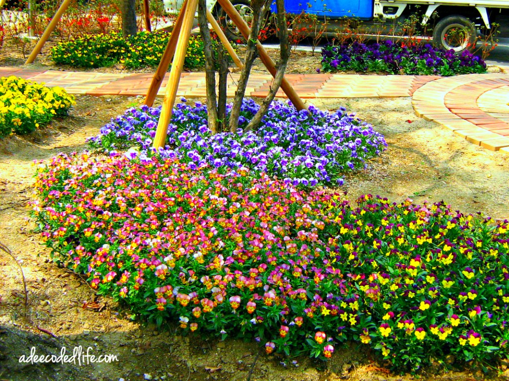 seoul korea flowers