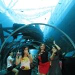 S. E. A. Aquarium @ MEMA