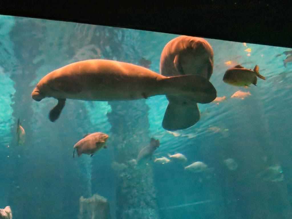 manatees aquarium