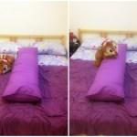Bed Talk