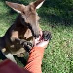 Top Three Travel Tips: Australia