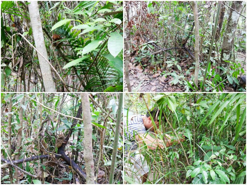 Bohol 2 - Tarsier Sanctuary