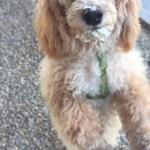 I have a Goddog (A Puppuccino Story)